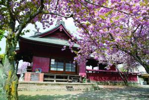 八重桜の美しい住吉神社