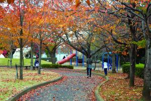 『けやき公園』の画像