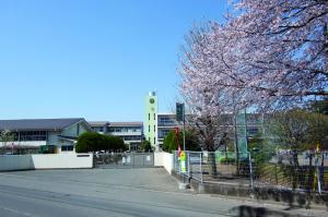 桜の城南小学校