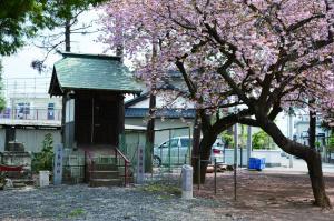 ぼたん桜の三峰神社