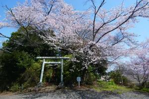 『松木合古墳群と桜』の画像