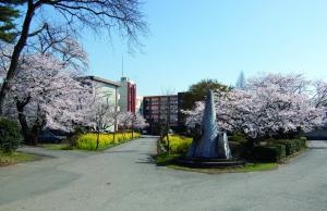 松林と桜の結城中学校