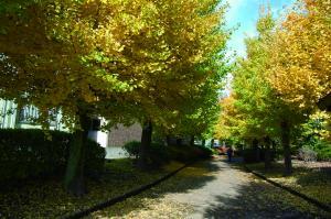 吉田用水と緑道公園