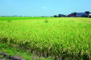 『小森の田んぼ』の画像