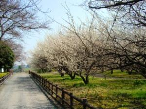 FC_城跡歴史公園2