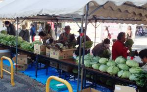 『農業祭H28用写真』の画像